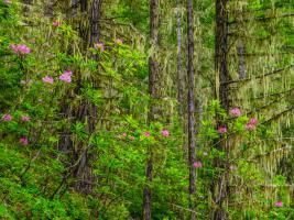 Trees 1 #109379