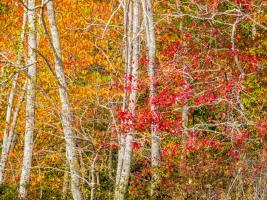 Trees 2 #109380