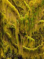Trees 6 #109384