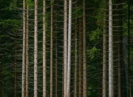 European Trees 1 #109804