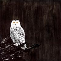 Owl #109867