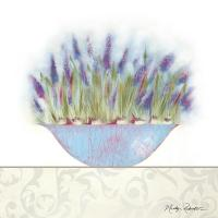 Grape Hyacinth #11744