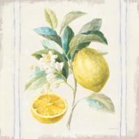 Floursack Lemons IV Sq Navy #46397
