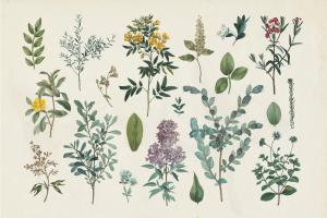 Victorian Garden IV #46808