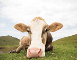 Close Up I v2 no Cows Crop #47620