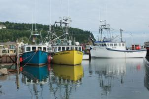 Bay of Fundy II #47838
