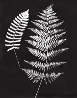Nature by the Lake Ferns V Black Crop #51196