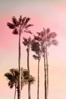 Pink Sunset 1 #51262