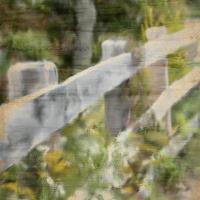 Wildflower Fence Line #51321