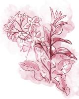 Water Inked Florals Blush #51805