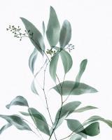 Gentle Botanical 3 #51844
