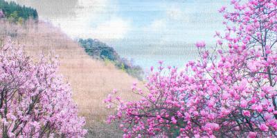 Hillside Blooms #53073