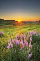 Prairie Sunrise #53743