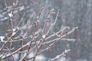 Glistening Branches I #60539