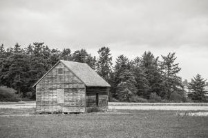 Old Shed, Hill Road Coupeville #98187