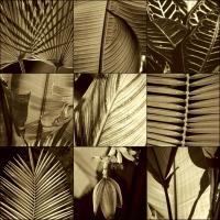 Tropical Leaves I #CKL4485