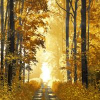 Sunlit Forest I #DST113311