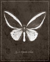Butterfly I #89442