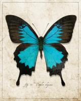 Blue Mountain Butterfly #87517