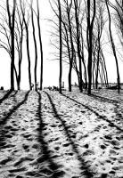 Long Shadows #90513