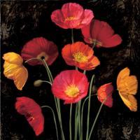 Poppy Bouquet I #IS4621