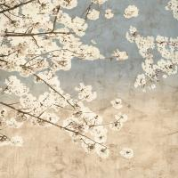 Cherry Blossoms II #IS5804