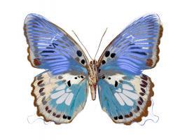 Golden Butterfly V #JBC113345