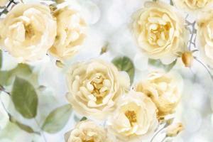 Yellow Rose Garden III #JL115073