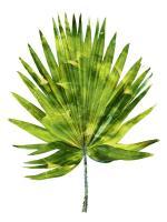 Palm IV #MMR114327