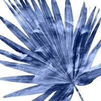 Tropical Indigo Palm IV #MMR114335