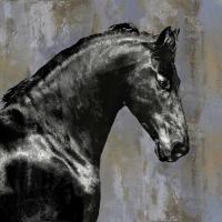 Black Stallion #MRR113456