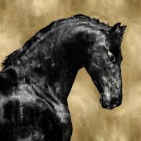Black Stallion on Gold #MRR113457