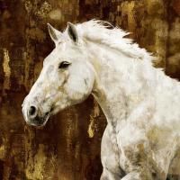 White Stallion #MRR113459