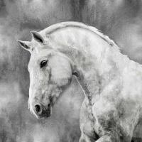 White Stallion on Silver #MRR113461
