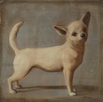 Chihuahua #OMAC-132