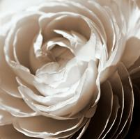 Soft Edges #PBRO-145