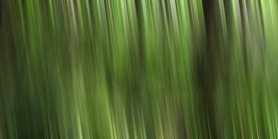 Tree motion #SK113924