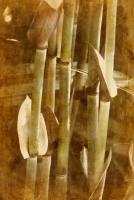 Bamboo #71539
