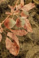 Vintage Apples I #75818