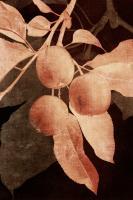 Hanging Apples I #75821
