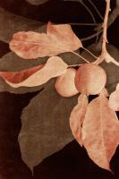Hanging Apples II #75822