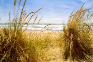 Dune Grass 3 #77926