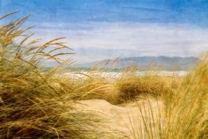 Dune Grass 4 #77927