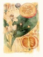 Citrus Aurantium #86945