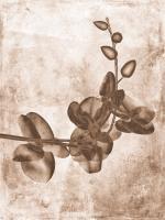 Sepia Flower Inversions 7 #102223