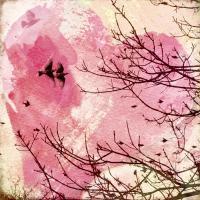 Pink Flight 1 #84005