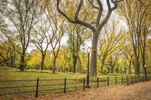Central Park Autumn 2 #92332