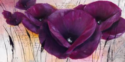 Pavot violet II #IG 3994
