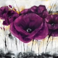 Pavot violet III #IG 3995