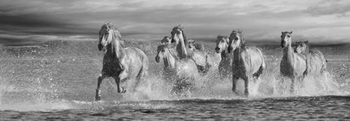 Horses Running at the Beach #IG 4661